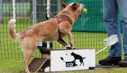 Cursus flyball